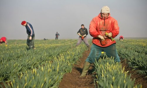 migrant-workers-lincolnshire